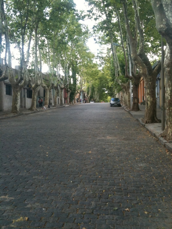 Colonia Trees